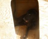 כאן אפשר לראות את לילו כבר מנסה את המלונה, בפוקוס על המפתן.