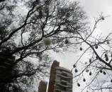 תמונות נבחרות - עץ הכותנה