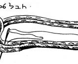 תפור את קצה החבל אל המקום בו הסוליה רחבה ביותר, והמשך לתפור בתפרים גסים