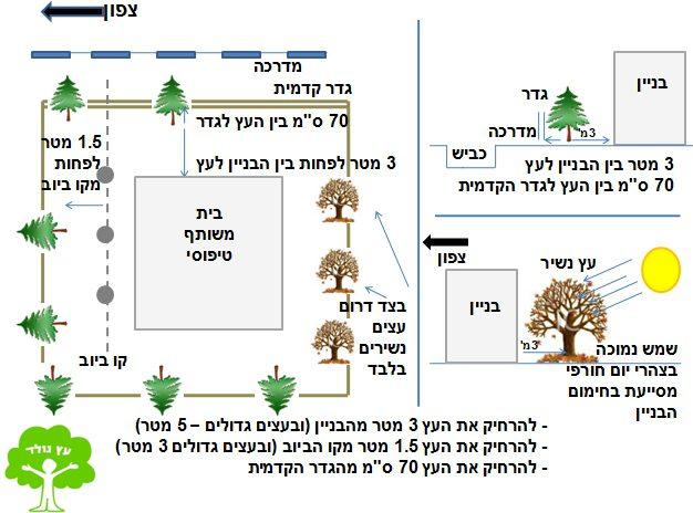 עץ נולד - תרשים מיקום עצים