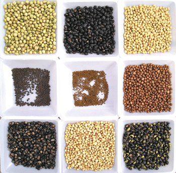 מדריך לשמירת זרעי מורשת