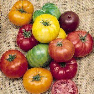 אף על פי ששני זנים של עגבניות שונים זה מזה בטעם, בצבע ובצורה, הם יכולים להפרות אחד את השני