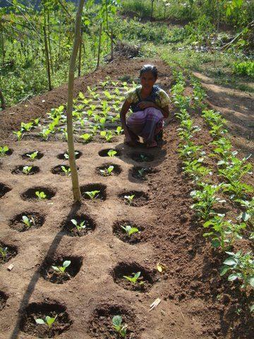 zai holes - בשיטה זו הצמחים נשתלים בתוך בורות המונמכים מעט מפני האדמה