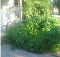 הירוק היום ירוק מאד
