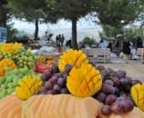 מזון היה כמעט לחלוטין מקומי ואורגני - כולל יין אקולוגי מיצרנים קטנים באזור