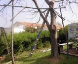 """ה""""ח"""" הראשון נשען על העץ לבדיקה. מטעמי בטיחות קשרתי אותו לגזע"""