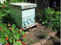 גידול דבורים בתנאים אורגניים, ללא תוספות כימיות לכוורת, זו שליחות