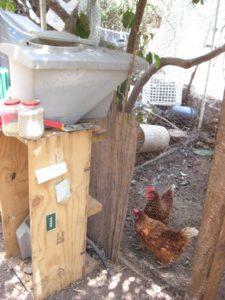 מערכת האכלת תרנגולת פרמה-אוטומטית