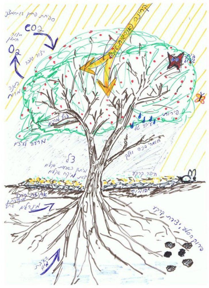 מונע על ידי קרינת השמש, העץ יוצר שפע בר קיימא