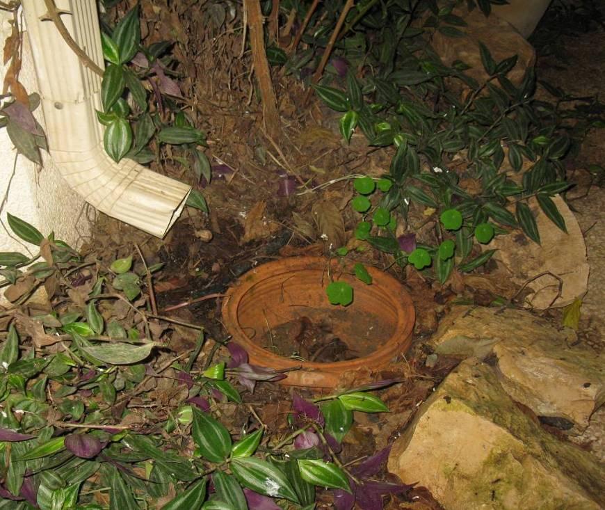 עציץ בלי תחתית לתיעול מים לאדמה