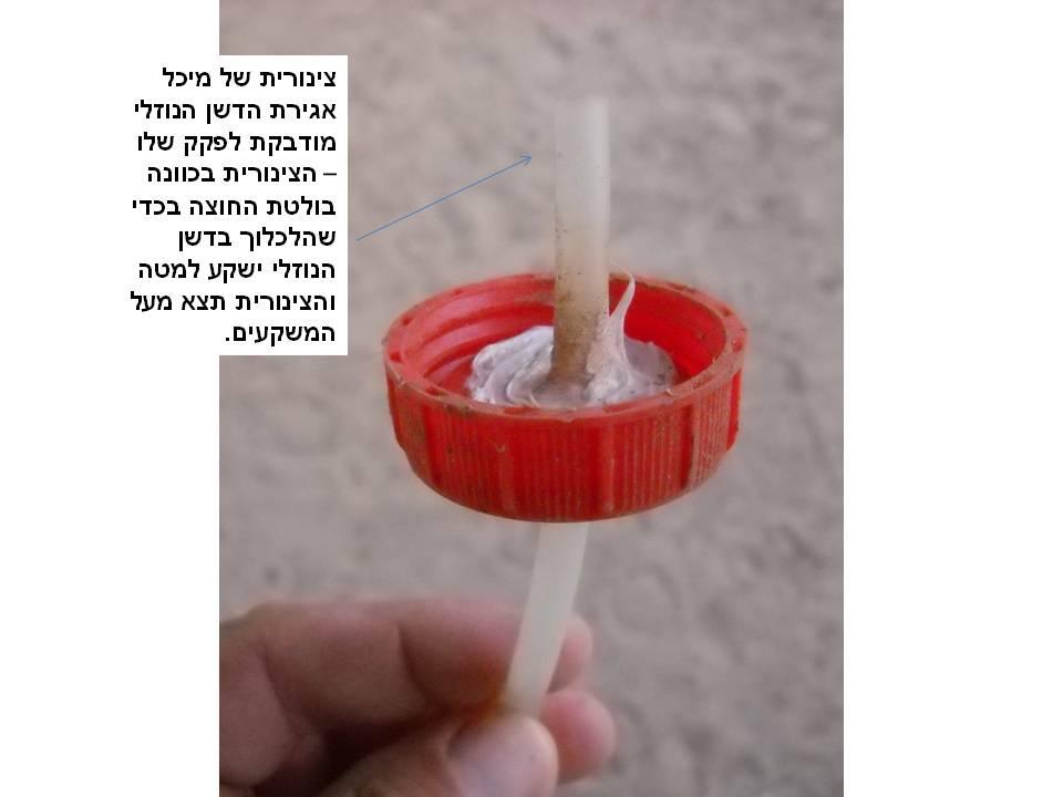 צינורית של מיכל אגירת הדשן הנוזלי מודבקת בפקק - הצינורית בכוונה בולטת החוצה בכדי שבוצת הדשן הנוזלי תשקע והצינורית תצא מעליה