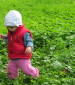 אורי מאיר-צ'יזיק  ליקוט צמחי בר למאכל