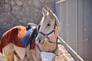 הסוס בלי האביר