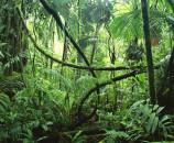 rainforest trees and plants