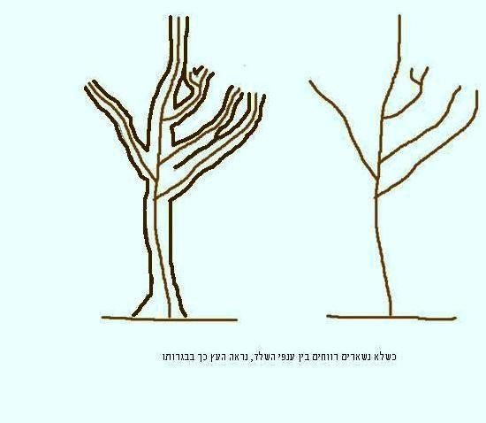 כשלא משאירים רווחים בין ענפים1
