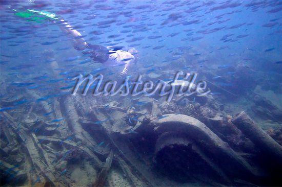 ציוד צבאי שטבע ומשמש כבית גידול לאלמוגים וחיות ים