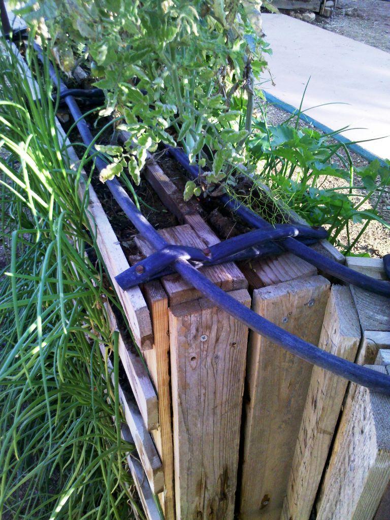 צינורות ההשקיה מחוברים לחלק העליון של משטח הגינה עם חתיכת צינור השקיה ישן ומסמרים.