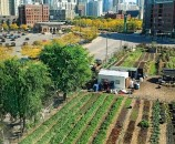 urban agri