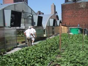 zabar-Greenhouse