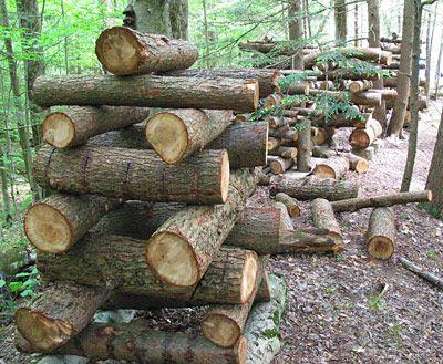 אגירה מסיבית- למה להסתפק בגזע עץ אחד כשאפשר להאכיל רחוב שלם