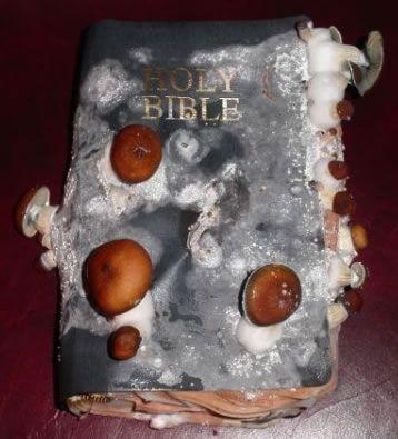 """פטריות בספר תנ""""ך- קצת קיצוני מדי לטעמי, אך לא טעמתי את הפטריות, אולי הקדושה משפיע על הטעם :)"""