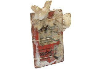 פטריות שגדלות בספר שכבר לא בשימוש ובטוח לא יהיה בשימוש אחרי