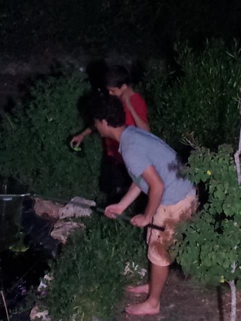 הילדים מנסים לצוד צפרדעים