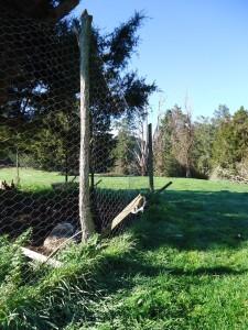 גדר עמידה לכבשים