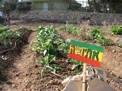 הגינה הקהילתית של שבועת האדמה