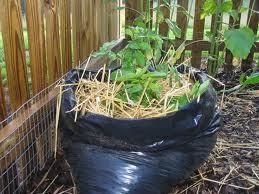 גידול תפוחי אדמה בשק במקום בצמיגים