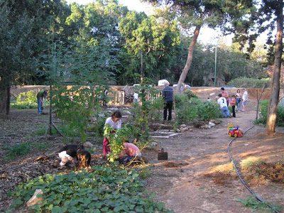 הגינה הקהילתית מעוז אביב