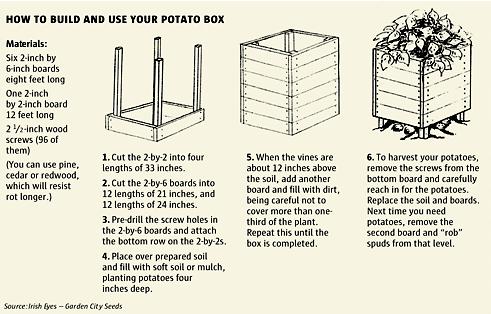 תפוחי אדמה- למי שפוחד לגדל בצמיגים ניתן גיתן גם לבנות מסגרות עץ