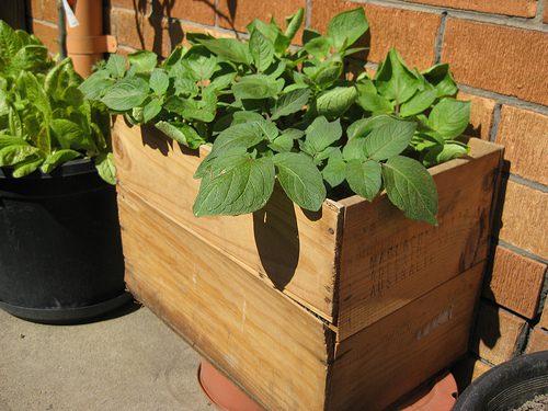 תפוחי אדמה מסגרות עץ- הזמן להוסיף קומה שלישית