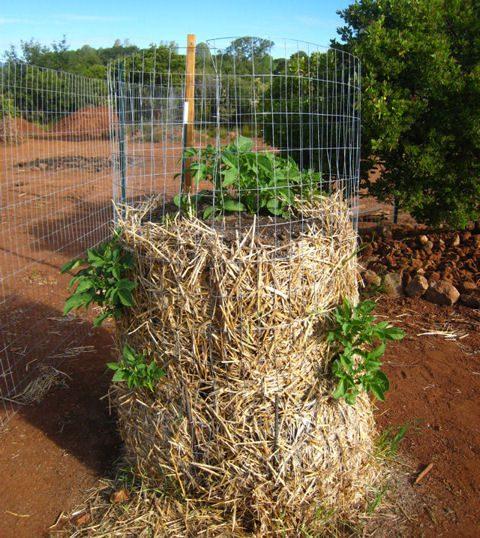 תפוחי אדמה- רשת במקום צמיגים- גדל לכל הכיוונים