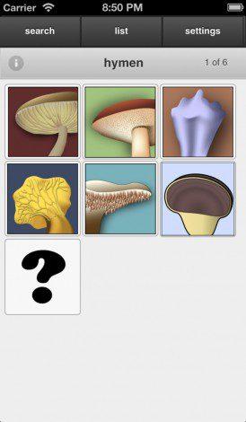 אפליקציית פטריות- מיון לפי הצורה, הצבע, המרקם ועוד