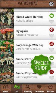 אפליקציית פטריות- התאמה של מוצר לפטריות הנמצאות באזורנו