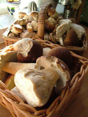 סלסלאת קש לפטריות