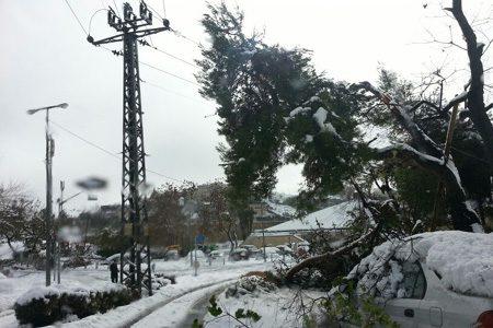 נזקי הסופה- האם כריתת העצים היא הפתרון