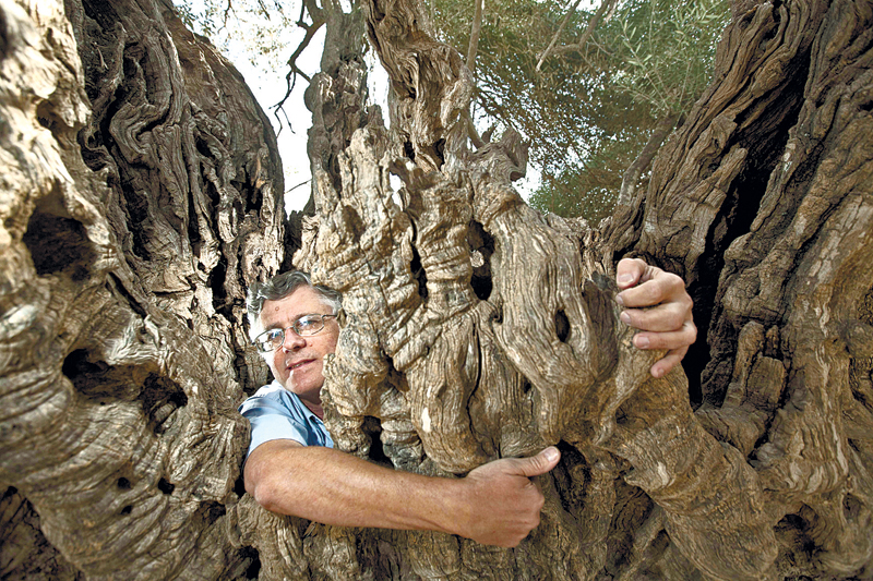 פקיד היערות ישראל גלון מכפר סבא מגן על עץ בוגר