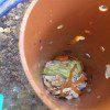 פסולת מטבח ראשונה בתוך ארובת התולעים