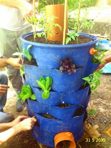 שתילה עם תמיכה לצמחים היכן שניתן