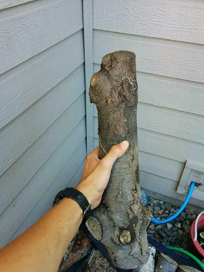 מסור שרשרת בקופסאת סוכריות- בול עץ שנחתך בעזרת המסור