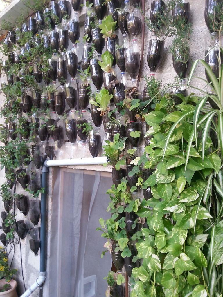 קיר ירוק מבקבוקים