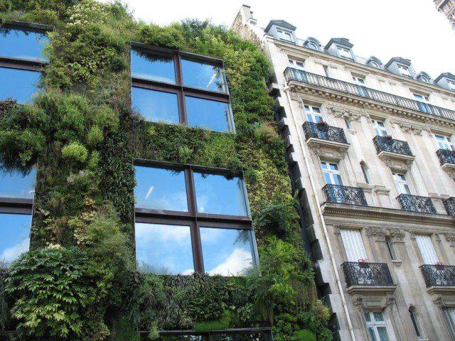 קיר ירוק מכסה בית