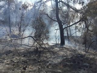 שיקום אחרי שריפות