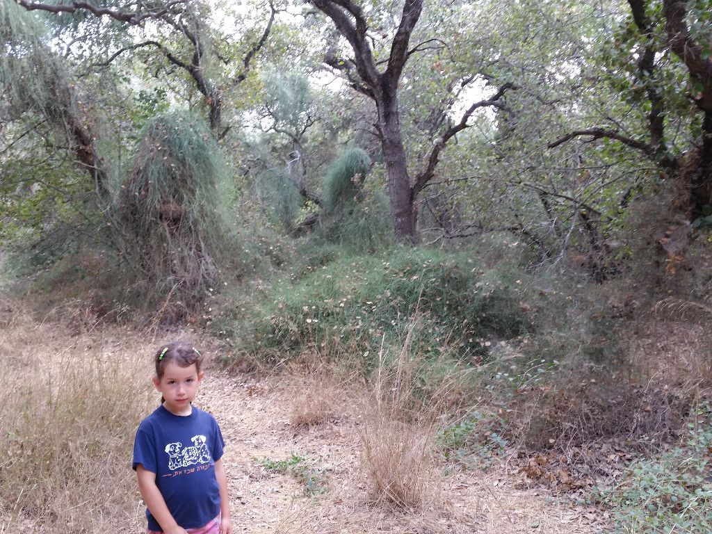 יער אלוני אבא. דוגמא למערכת טבעית יציבה וארוכת טווח. מגוון מינים, שכבות גידול, צמחים מקבעי חנקן, חיפוי קרקע, מערכת השקייה אוטומטית (גשם :-) ) וכמובן שני הקטנה שהיא חלק בלתי נפרד מהמערכת . פשוט ללמוד מהטבע…