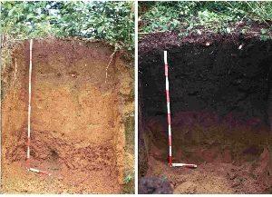 השוואה בין קרקע עם טרה פרטה לקרקע דומה ללא