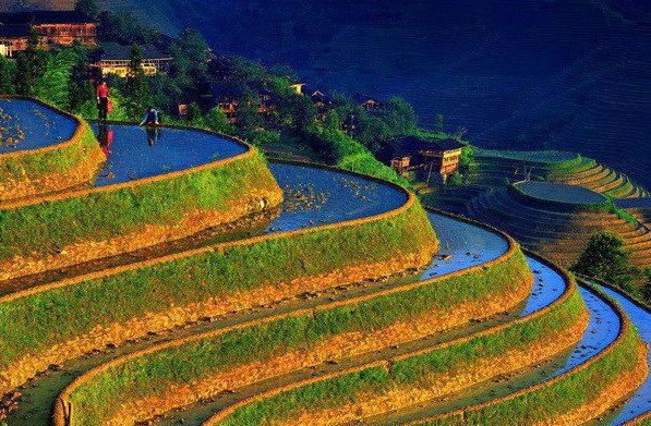 טרסות אורז. ביטול הואדיות. ההשקיה נעשית בהצפה