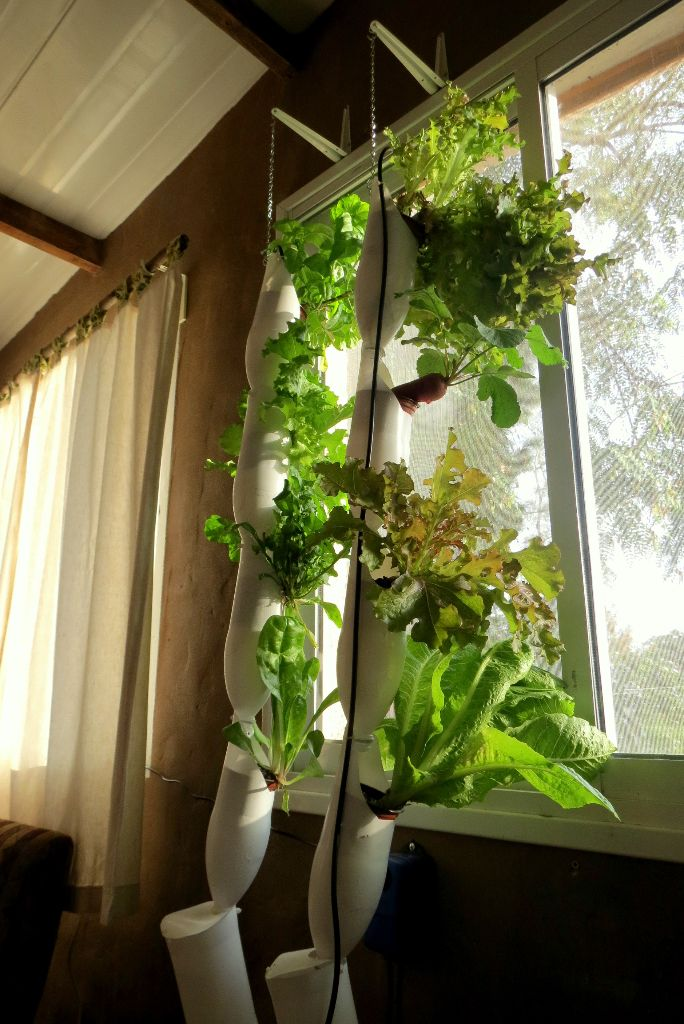 חוות חלון 2015