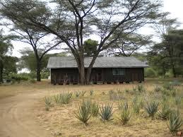לוקיצוקיו- בתים תחת העצים